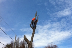 Arbor-Tech_Tree_Service_pic01