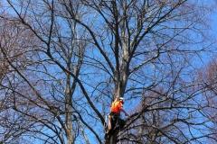 Arbor-Tech_Tree_Service_pic02