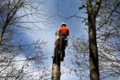 Arbor-Tech_Tree_Service_pic03