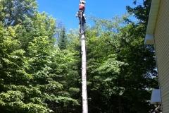 Arbor-Tech_Tree_Service_pic06