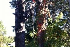 Arbor-Tech_Tree_Service_pic09